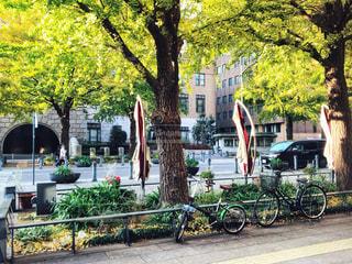 木の隣に自転車を駐車します。の写真・画像素材[1238064]