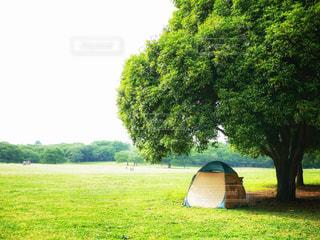 木陰のテント - No.1260288