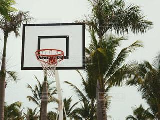 バスケの写真・画像素材[1293104]