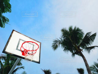 ヤシの木とバスケットゴールの写真・画像素材[1293105]