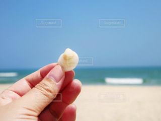 貝殻の写真・画像素材[1295483]
