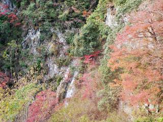 箕面の滝の写真・画像素材[1742535]