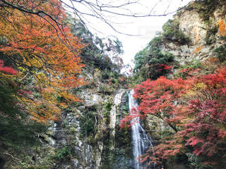 木々 に囲まれた滝の写真・画像素材[1742538]