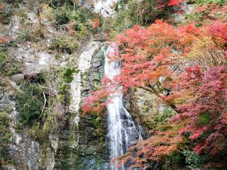 紅葉と滝の写真・画像素材[1742550]