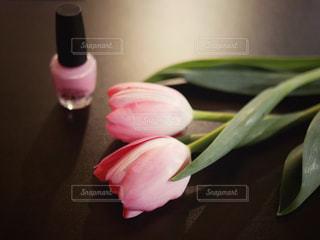 大人ピンクの写真・画像素材[1814718]