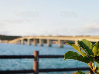 植物越しの浜比嘉大橋の写真・画像素材[2009922]