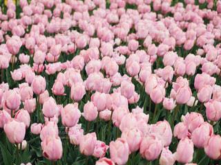 ピンクの世界の写真・画像素材[2040873]