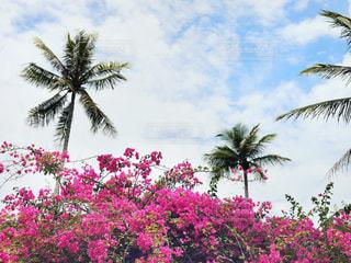 ピンクの花とヤシの木の写真・画像素材[2210138]
