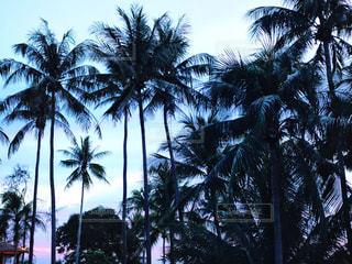 海沿いのヤシの木の写真・画像素材[2210139]