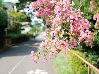 花のクローズアップの写真・画像素材[2414752]