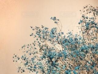かすみ草の写真・画像素材[2728351]