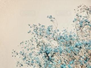 いつかのかすみ草の写真・画像素材[2728352]