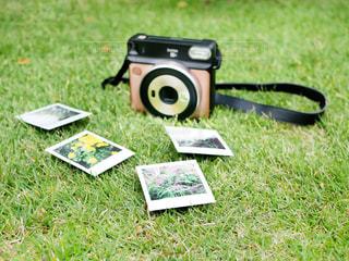 草で覆われた野原の上にあるおもちゃの動物のクローズアップの写真・画像素材[3206720]