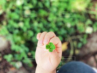花を持つ手の写真・画像素材[3287530]
