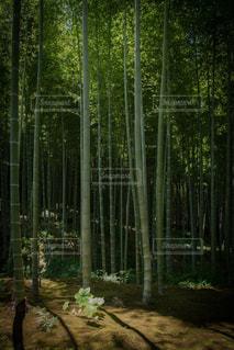 京都の写真・画像素材[648932]