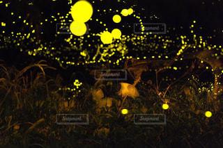 暗い部屋で黄色い花の写真・画像素材[769877]