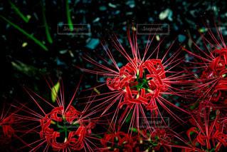 色とりどりの花のグループの写真・画像素材[773118]