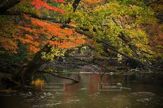 水の体の上の大きな滝の写真・画像素材[812118]