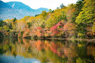 木々 に囲まれた水の体の写真・画像素材[812119]