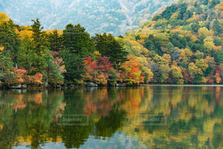 木々 に囲まれた水の体の写真・画像素材[812120]