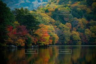 木々 に囲まれた水の体の写真・画像素材[812121]