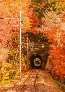 下り列車を走行する列車は森の近く追跡します。の写真・画像素材[899929]