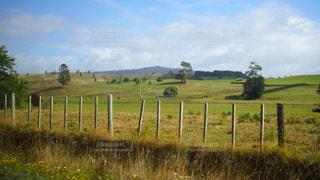 ニュージーランドの牧草地の写真・画像素材[742648]