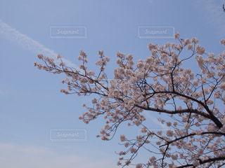 近くの木のアップ - No.742870