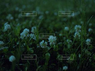 近くのフラワー ガーデンの写真・画像素材[742871]