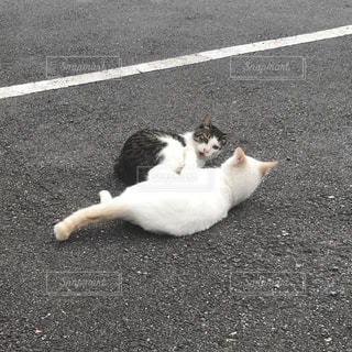 道路上に横たわる猫の写真・画像素材[818462]
