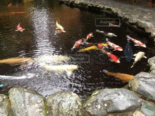 池の写真・画像素材[649742]
