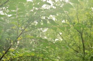 自然の写真・画像素材[650019]