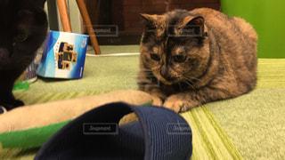 猫の写真・画像素材[650037]