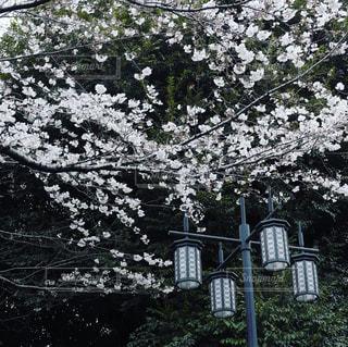 春の写真・画像素材[650074]