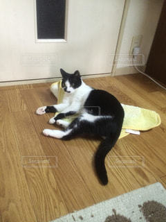 猫 - No.650318