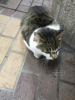 猫の写真・画像素材[650595]