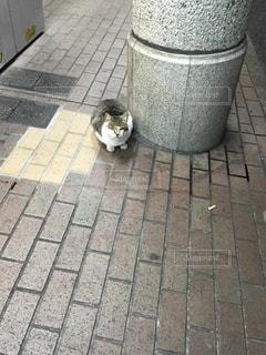 猫の写真・画像素材[650606]
