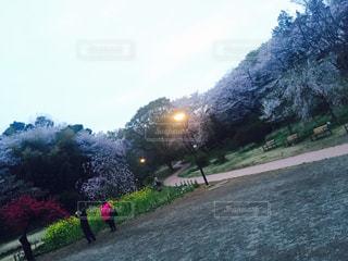 桜の写真・画像素材[651573]
