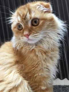 猫の写真・画像素材[651844]