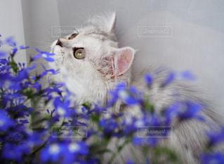 猫 - No.651866