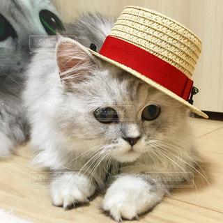 猫の写真・画像素材[663203]