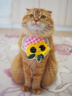 猫の写真・画像素材[663204]