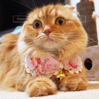 猫の写真・画像素材[663205]