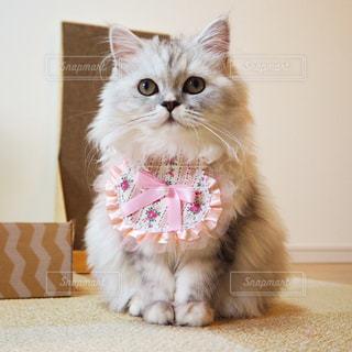 猫の写真・画像素材[663206]