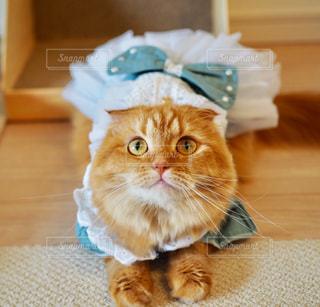 床に座って猫の写真・画像素材[849478]