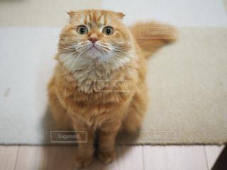 カメラを見ている猫の写真・画像素材[958038]