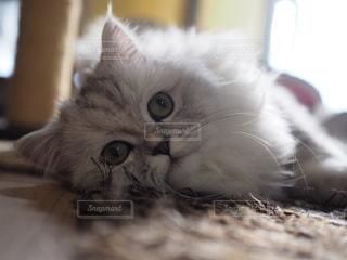 近くに猫のアップの写真・画像素材[958039]