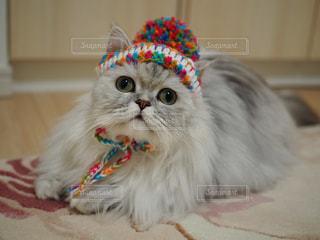 冬はこの帽子をかぶってお散歩したい!の写真・画像素材[1497741]