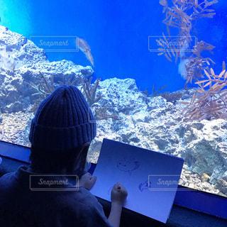 水族館の写真・画像素材[650570]