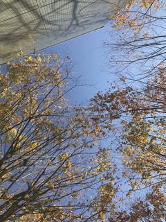 近くの木のアップの写真・画像素材[1675954]